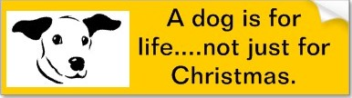 slogan a dog is for life not just for christmas